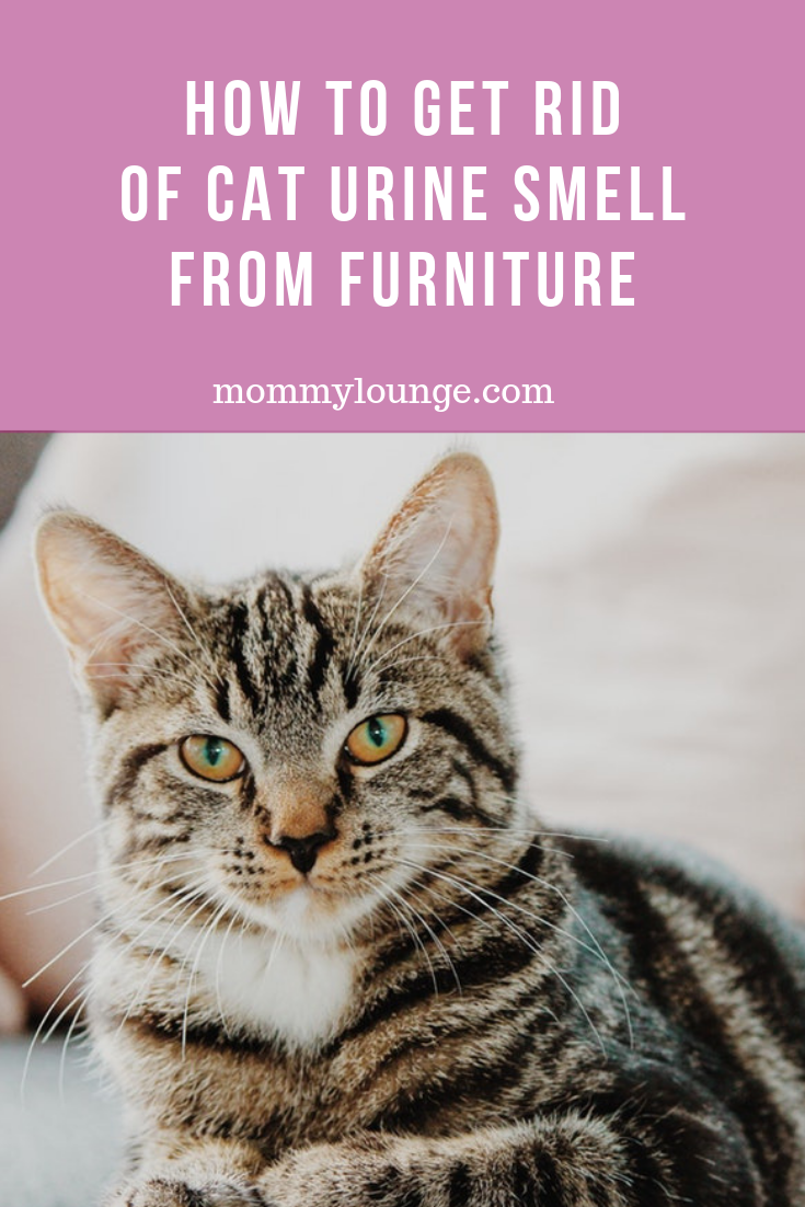 Cool How To Remove Cat Urine Smell Mommy Lounge Alphanode Cool Chair Designs And Ideas Alphanodeonline